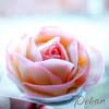 Насадка кондитерская Лепесток розы прямой №125 Tulip